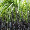 Nhóm các mã cổ phiếu ngành mía đường có mã nào nên đầu tư 2021
